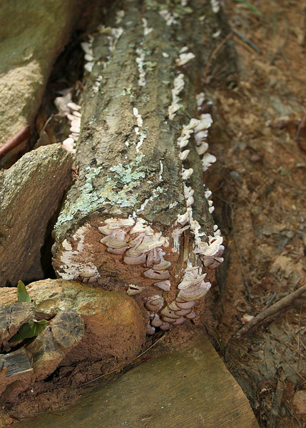 White fungus on tree