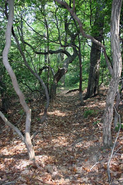 Interesting tree formations