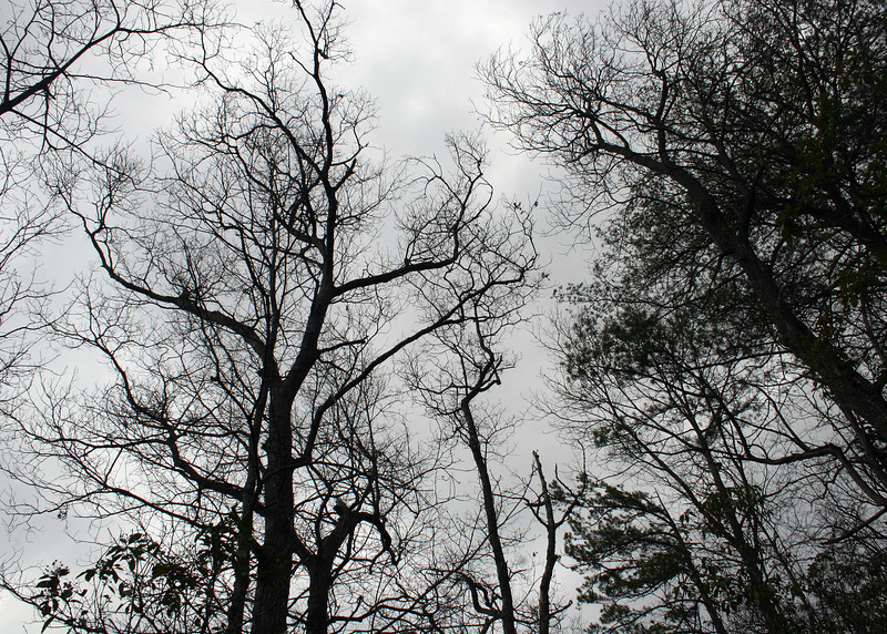 The bare branches against the gray sky makes for an interesting pattern