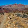 Grand Canyon 3-29-21 PP_V9A9363