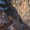 Grand Canyon 3-29-21_V9A9311