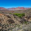 Grand Canyon 3-29-21 PP_V9A9355