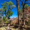 Grand Canyon 3-29-21_V9A9354