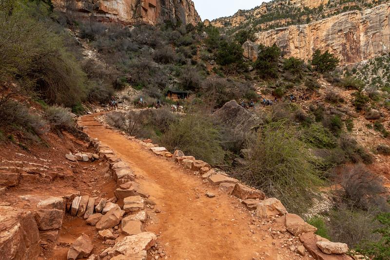 2019 Grand Canyon Day 5_V9A6139
