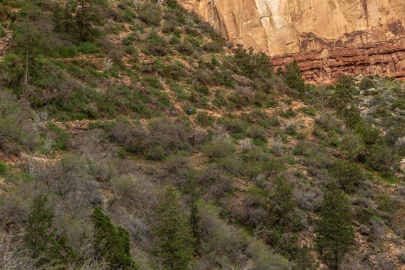 2019 Grand Canyon Day 5_V9A6142
