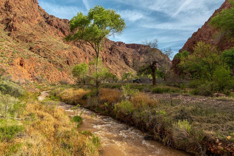 Grand Canyon 2019 Day 2_V9A5853