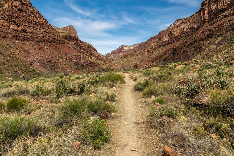 Grand Canyon 2019 Day 2_V9A5953