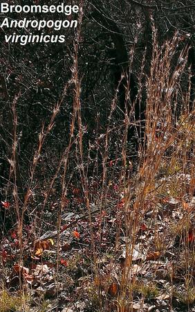 Habron Gap 2014-11-12