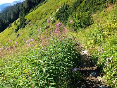 Still an abundance of wildflowers, although fading