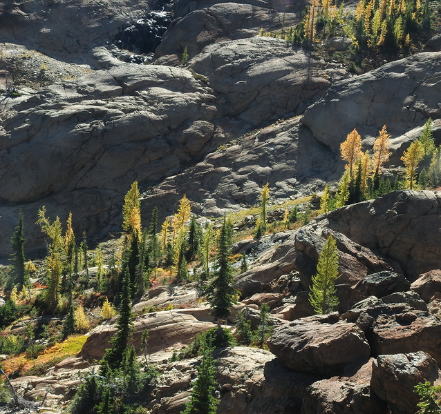 Larch and Boulder Landscape