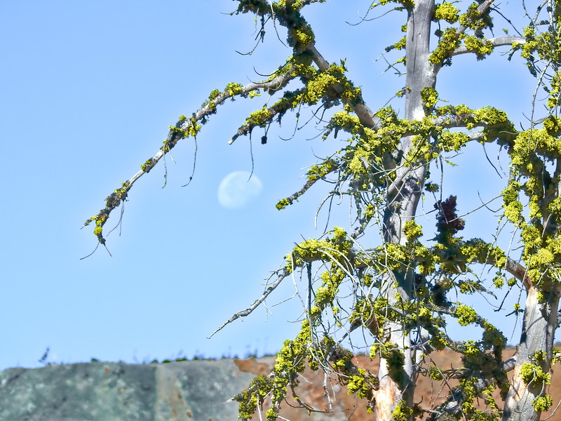 Lichen and the Moon