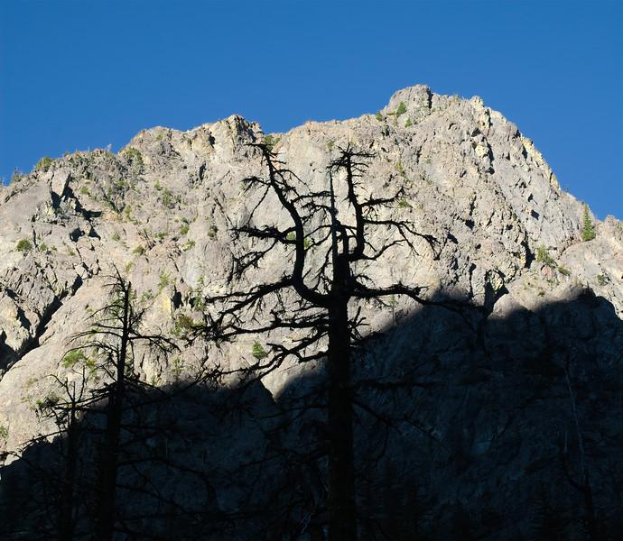 Tree Shadow Speaking