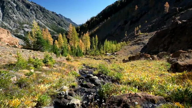 Video of Headlight Creek and Larch Trees