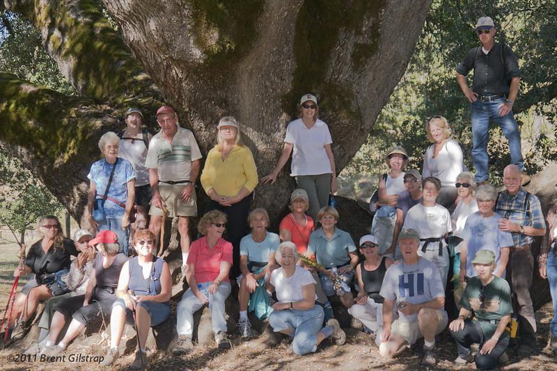 Sierra Hiking Seniors, Really Big Oak<br /> Close Up