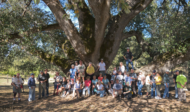 Sierra Hiking Seniors, Really Big Oak<br /> Wide Shot