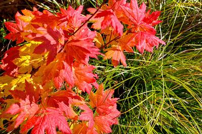 BillEdwards-Vine Maple-Kelly Butte-2776_TMDE.jpg