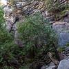 Mist Trail 8-27-17_MG_3339