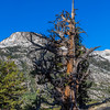 Trail above Muir Trail Ranch 9-8-17_MG_4331