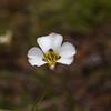 Maraposa Flower 9-8-17_MG_4400