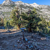 Muir Trail Ranch Jct 9-8-17_MG_4327