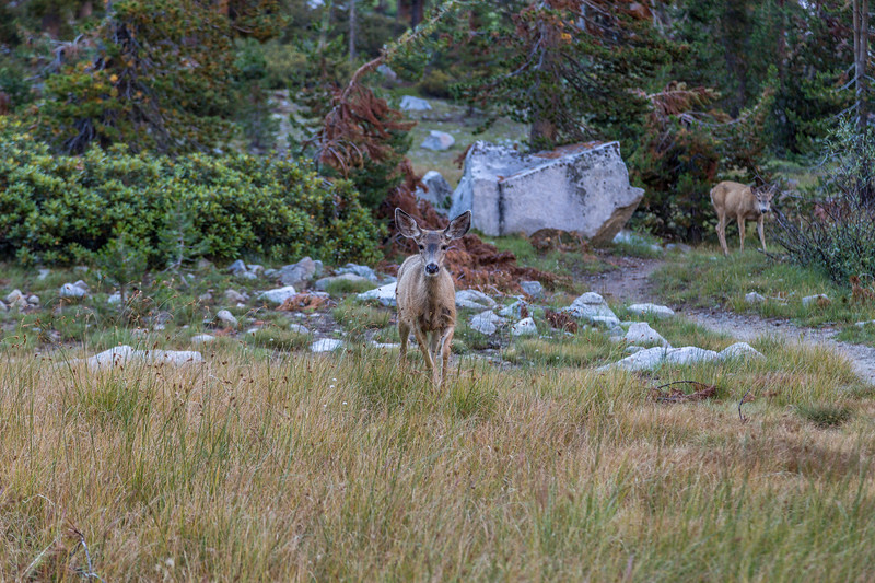 Morning visitor to trail 9-10-17_MG_4547