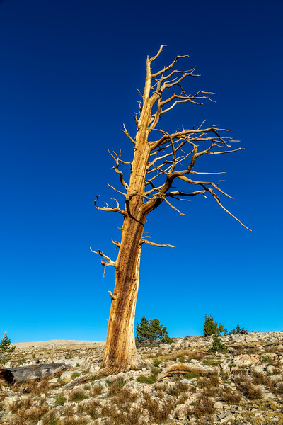 Old tree 9-15-17_MG_4888