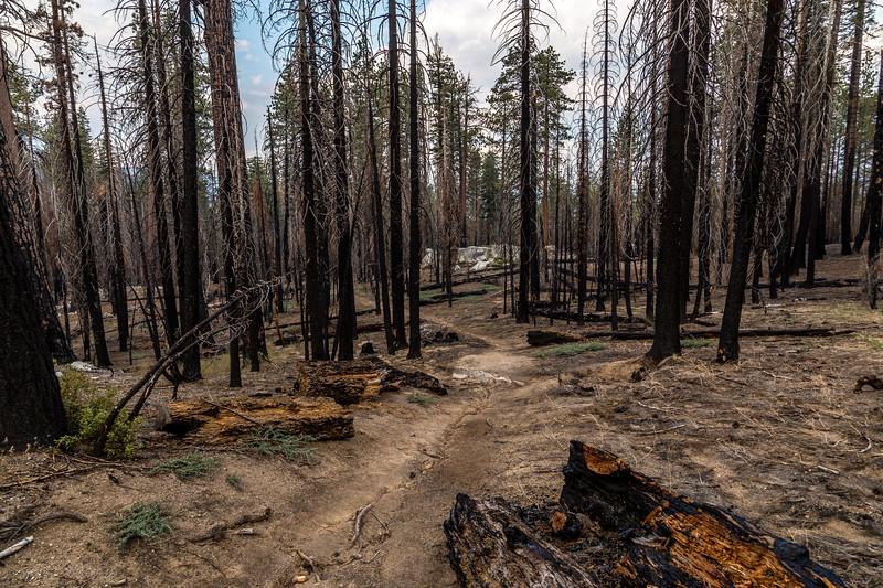 Trail fire damage 8=30-17_MG_3564