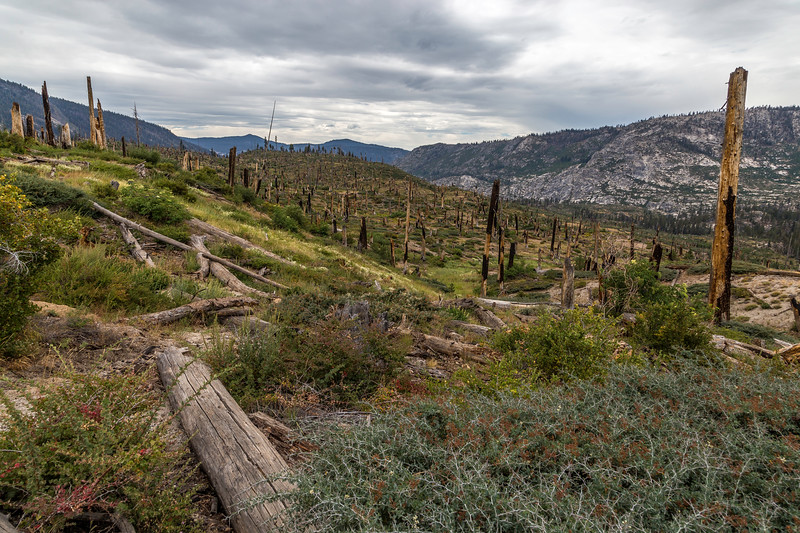 Fire scar South of Reds Meadow 9-4-17_MG_4082