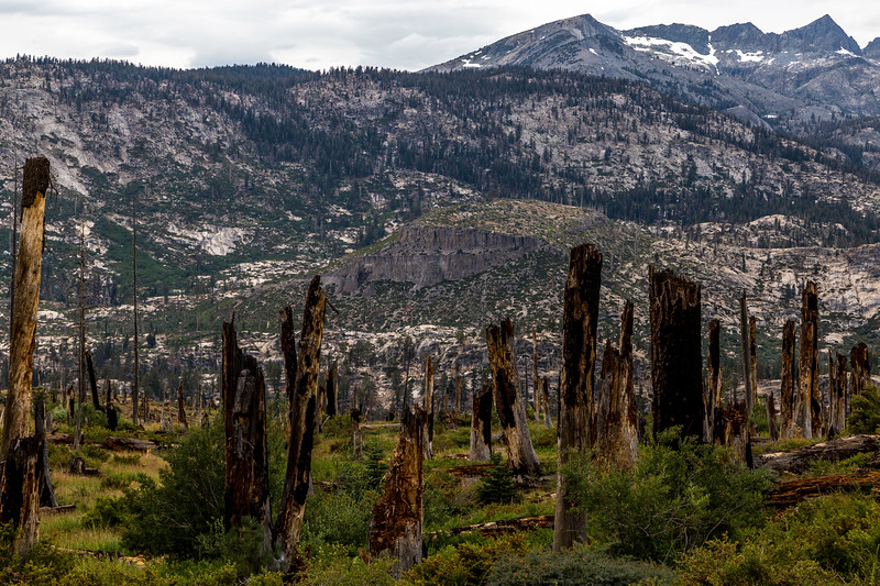 Fire scar South of Reds Meadow 9-4-17_MG_4084