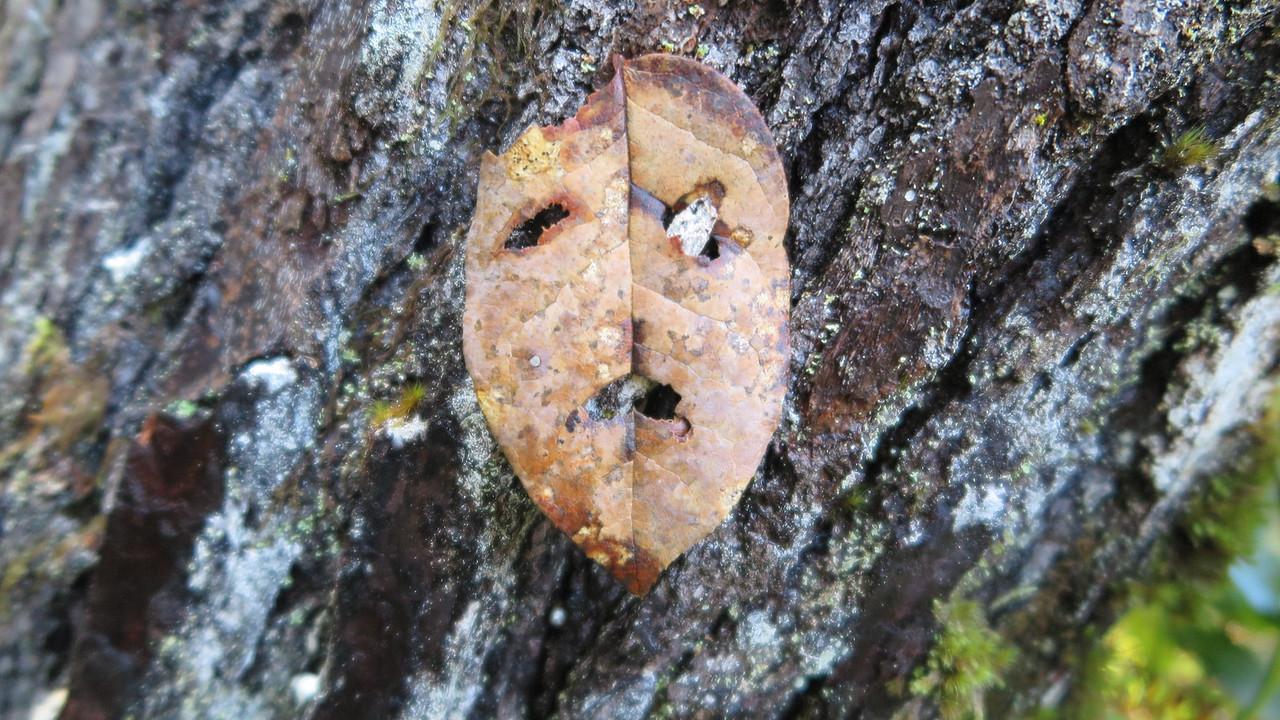 Sad leaf :-)