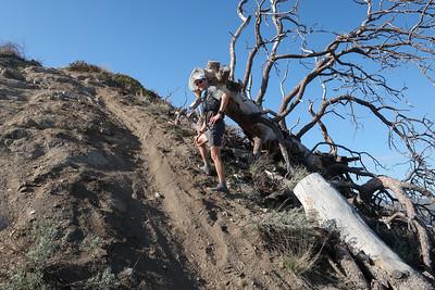 Steep slopes, fallen tree.  Photo:  Paul