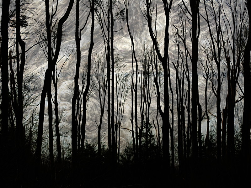 Winter Tree - Stark and Swirling