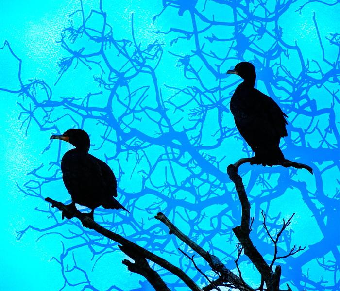 Two Tree Cormorant