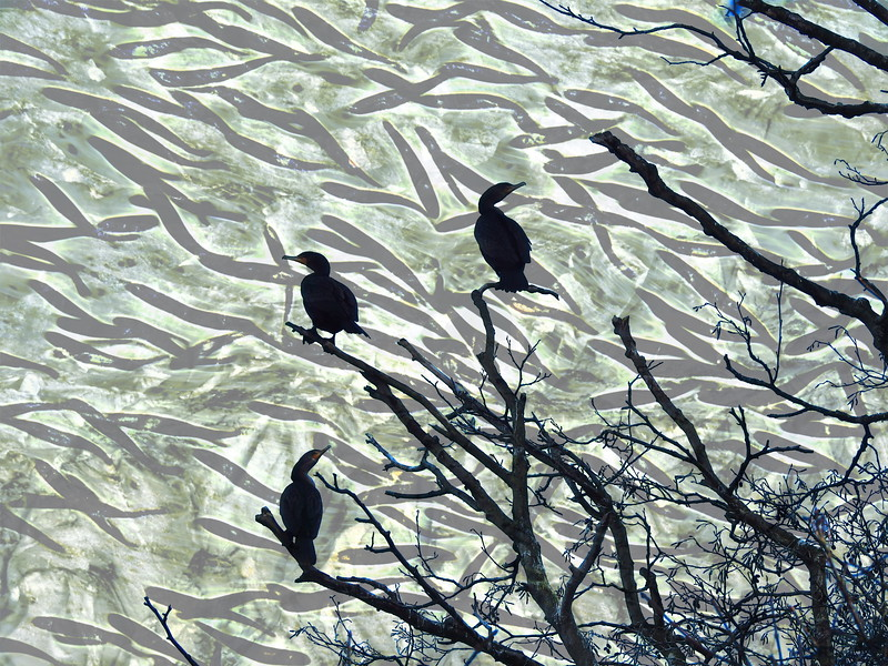 Three Tree Heron