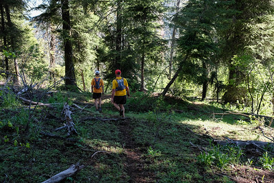 We break into the trees as we approach the intersection of two ridgelines.