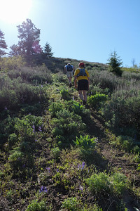 Last steep ascent amidst larkspur in bloom.