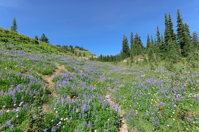 Naches Loop Trail