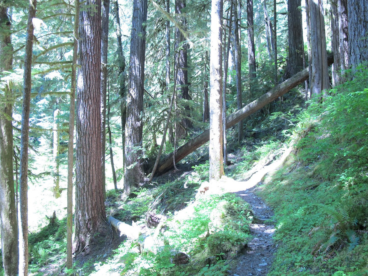 The trail passes under a downed tree.