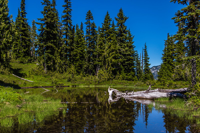 PCT 2016 Trail photo 7-26-16_MG_0657