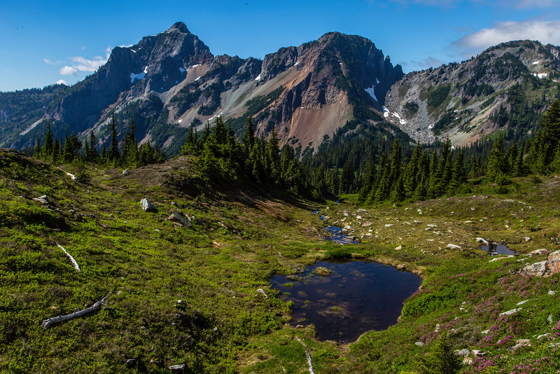 PCT 2016 Alpine Meadow 7-30-16_MG_1282