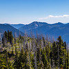 PCT 2016 First Silver Forest 7-28-16_MG_0921