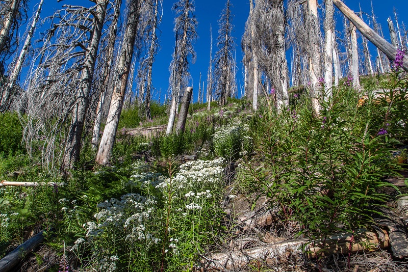 PCT 2016 Forest fire area 7-29-16_MG_1016