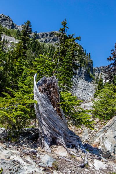 PCT 2016 Trail photo 7-28-16_MG_0916