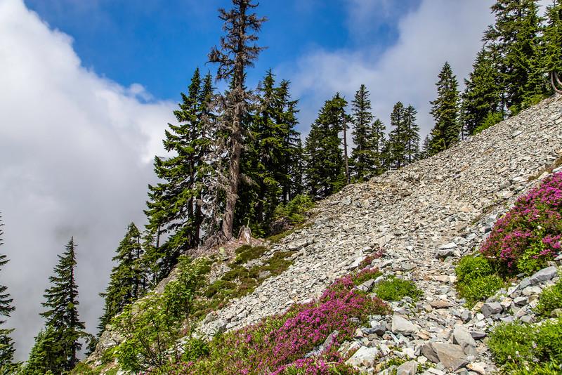 PCT 2016 Rock Trail photo 7-30-16_MG_1298