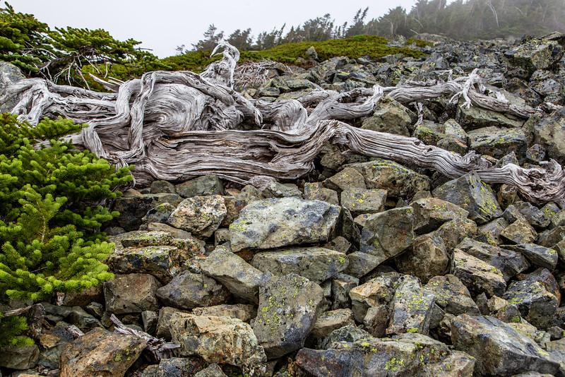 PCT 2016 Rock Trail photo 7-30-16_MG_1303