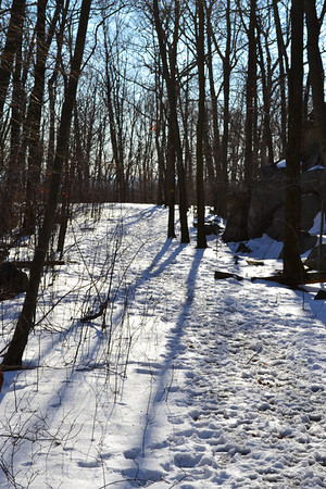 Ramapo State Forest 1/3/11
