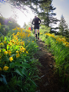 In a moment of warm sun, the balsamroot is still prime up here.