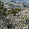 The trail descends through an ecosystem that is part Chihuahuan desert, part piñon-juniper scrub and riparian with cottonwood and sycamore at river level.