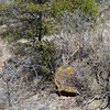 Many rocks sport bright lichens.