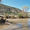 """The river is still """"up"""", filled by snowmelt, and running brown.<br /> Note debris piled up against tree trunk, from when the level was higher."""